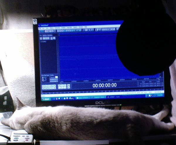 Dali the cat helping out in the audio recording studio