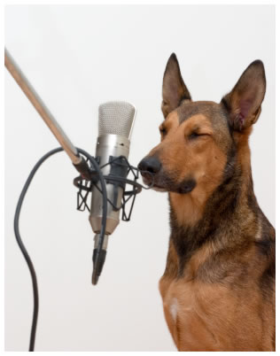 Belgian Malinois Dog microphone