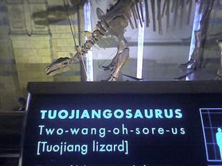 Dinosaur Natural History Museum - Flickr CC, Mat Hampson