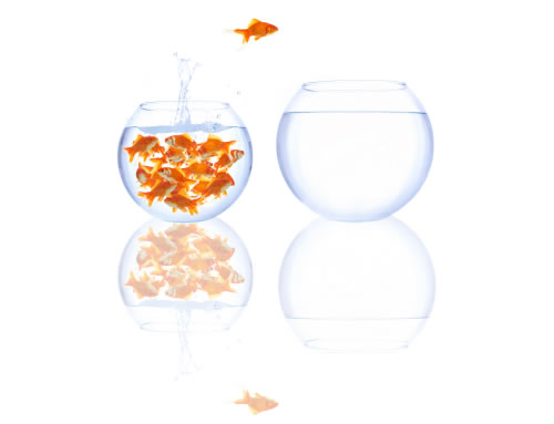 Goldfish in Bowls