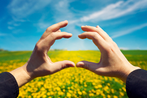 Two hands (female) framing a field of yellow flowers on a bright sunny day. Perspective, progress, growth, safety, assurance.