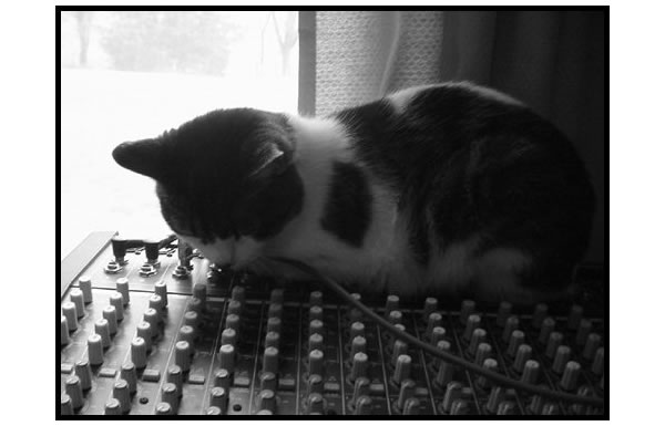 Heidi resting on the mixing board
