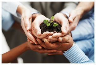 Many people putting their hands together to hold a green leafy plant in a handful of soil