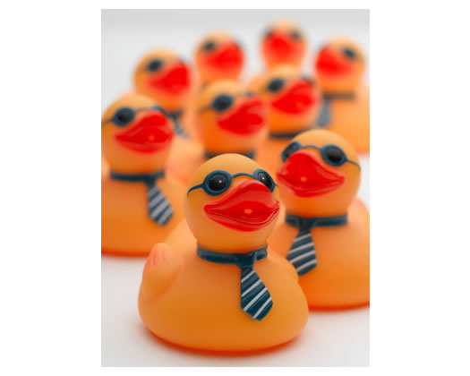 Rubber ducks with ties and sunglasses on