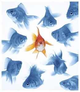 school-of-goldfish.jpg