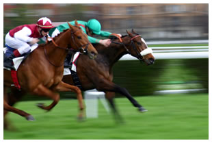 Two jockeys racing thoroughbred horses